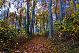 Fall Path at Leesylvania State Park