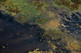 Sandhill Cranes on Paynes Prairie