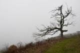Dead Tree against an Early AM Fog