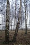 raccontare Auschwitz  - Birkenau 17