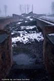 raccontare Auschwitz  - Birkenau 22