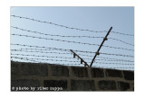 Ricordare Mauthausen con Mario Limentani - 19