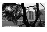 la finestra che parla con l' albero.jpg