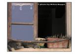 La finestra della Signora Pina