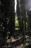 il sentiero della Gloria Dei, della via terrena