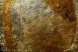 Il colore dell'oro dei simboli della Buzziana