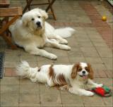 Barney and Teddy