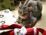 Christmas Squeak