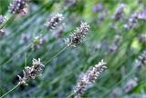 Lavender grey :)
