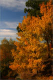 autumn hillside.jpg