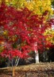 mt lofty garden red.jpg