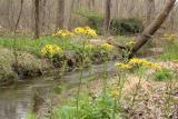 Paper Mill Creek