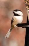 Birds, 2010