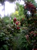 Tamilyog Trail