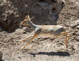 Djibouti  532.jpg