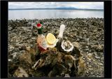 Oysters, Olympic Peninsula, WA