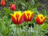Tuin KG april 09
