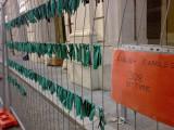 L'AQUILA 10 Ottobre 2010
