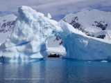Icebergs, Paradise Bay  1