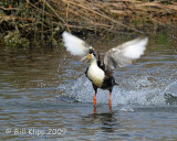 Duck Take Off   1