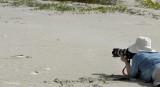 Ghost Crab, Sand Dollar Beach, 2