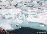 Polar Bear,  Svalbard Norway 2
