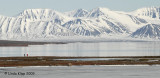 Reindeer Flats,  Svalbard Norway 1