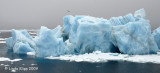 Iceberg,  Svalbard Norway  1