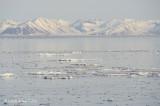 Moffen Island,  Svalbard Norway  1