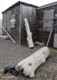 Trapper Hut,  Diskobutka Svalbard