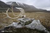Diskobuka Scenic, Svalbard  2