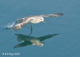 Fumar Takeoff, Svalbard 2