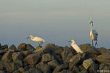 Egrets  21