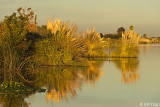 Indian Slough  2