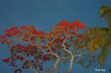 Pointsietta Tree  1