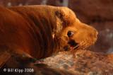 Baja Isla Islotes Ca Sea Lions