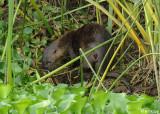 River Otter 2