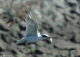 Tern Fishing 3