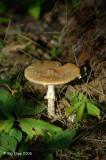 Mushroom,  Northern Minnesota