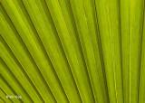 Palm Branch Key West 1