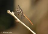 Dragon Fly, Cuba