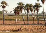 Pregnant Palms