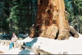 Vlad near sequoia