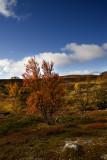 Mountain in Autumn Suit