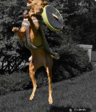 Frisbee Play