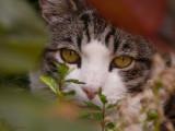 Peeping through the foliage