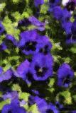 0539-pansies-PAINT.jpg