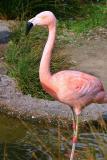 2875-flamingo.jpg