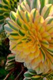 2925-succulent.jpg