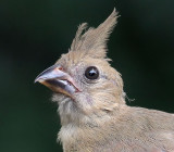 yard_birds